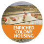 ENRICHED COLONY VIDEO